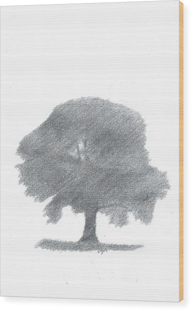 Oak Tree Drawing Number Four Wood Print by Alan Daysh