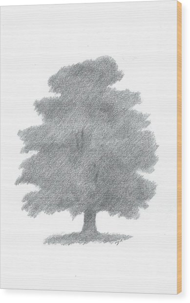 Oak Tree Drawing Number Six Wood Print by Alan Daysh