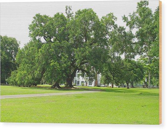 Oak Tree In Front Antibelum Home Wood Print by Ronald Olivier