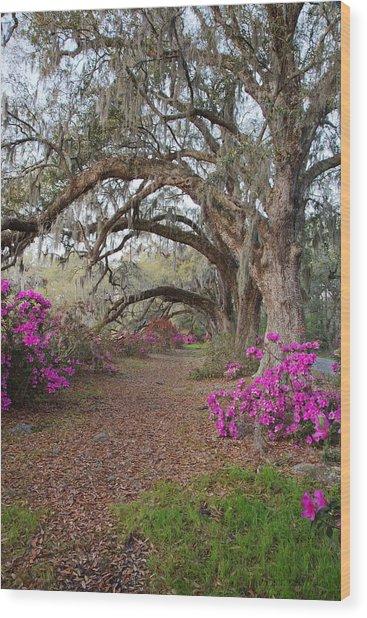 Oak Trees And Azaleas Wood Print
