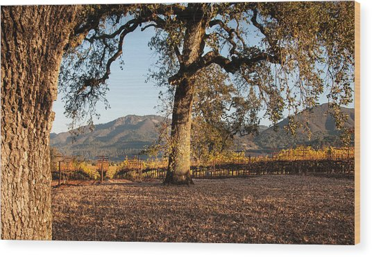 Oak Trees In The Vineyard Wood Print by Kent Sorensen