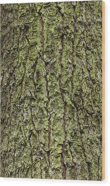 Oak With Lichen Wood Print