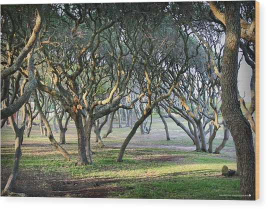 Oaks Of Fort Fisher Wood Print
