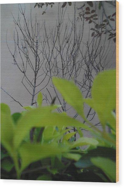 Observateur Wood Print by Beto Machado