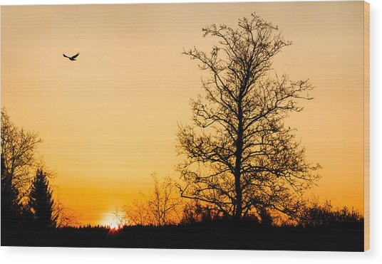 Observer Wood Print