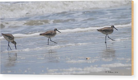 Ocracoke Shorebirds Wood Print