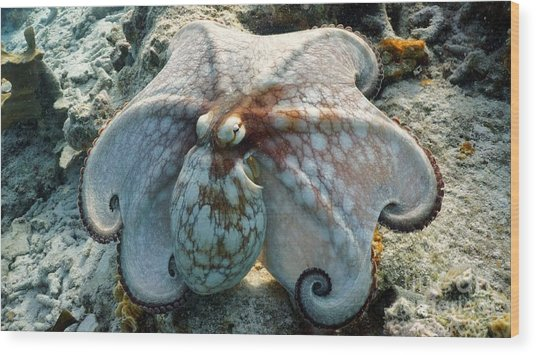 Octopus Posing Wood Print