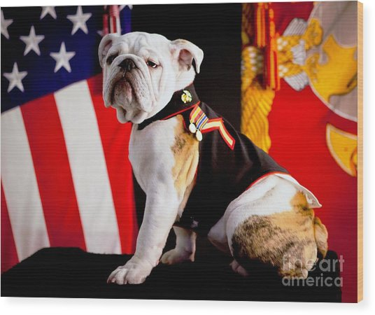Official Mascot Of The Marine Corps Wood Print