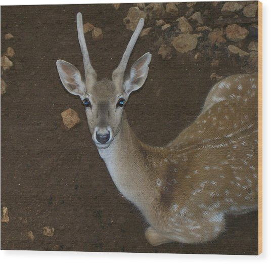 Oh Deer Wood Print by Noreen HaCohen