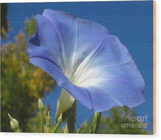 Oh Heavenly Blue 2 Wood Print