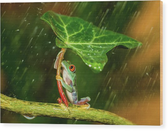 Ohh Noo :( It's Raining Wood Print