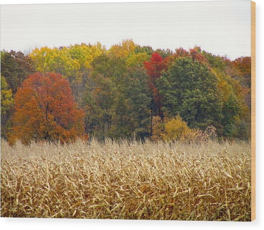 Ohio In November Wood Print by Andrea Dale