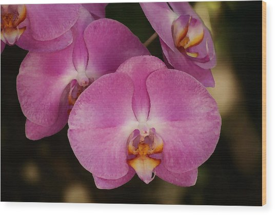 Oil Painted Orchids Wood Print