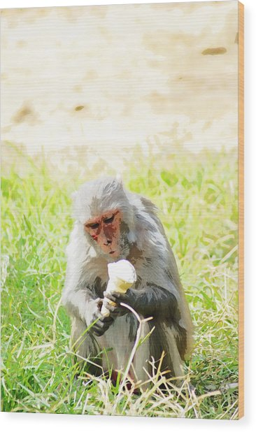 Oil Painting - A Monkey Eating An Ice Cream Wood Print