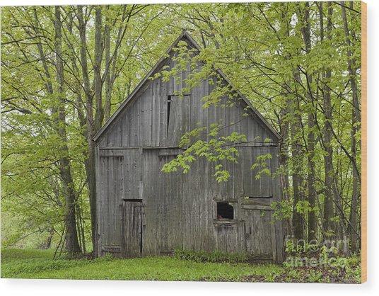 Old Barn In Spring Woods Wood Print