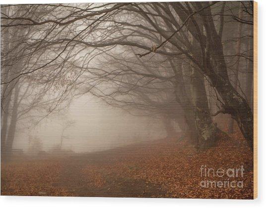 Old Beech Trees In Fog Wood Print