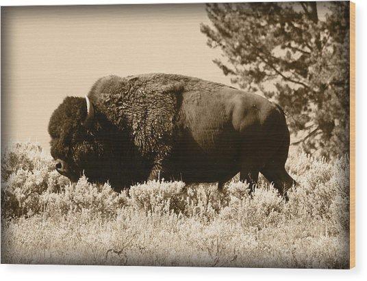 Old Bull Wood Print