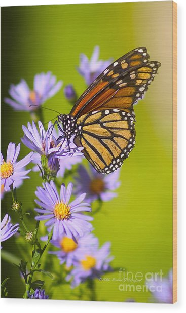 Old Butterfly On Aster Flower Wood Print