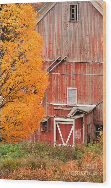 Old Dilapidated Country Barn During Autumn. Wood Print