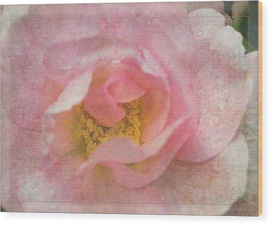 Old English Rose Wood Print