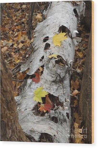 Old Fallen Birch Wood Print