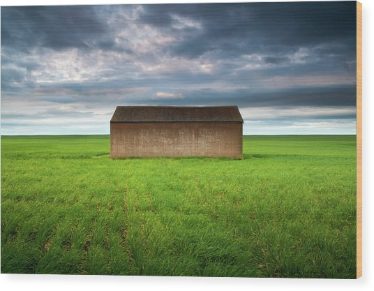 Old Farm Shed In Green Wheat Field Wood Print