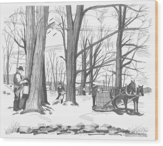 Old Fashioned Maple Syruping Wood Print