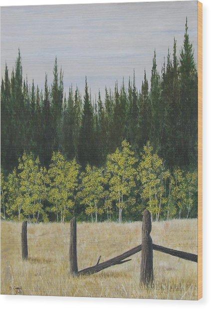 Old Fences Wood Print by Dana Carroll