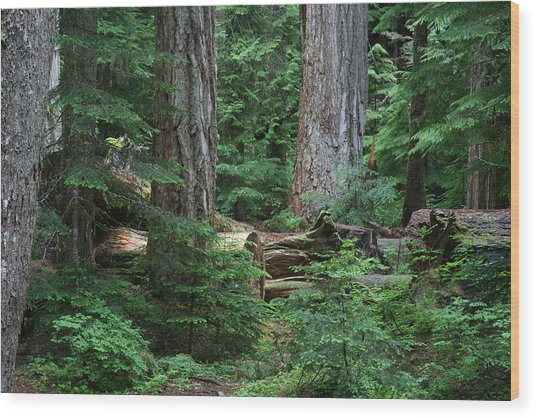 Old Growth Wood Print