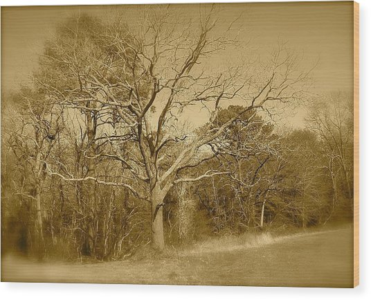 Old Haunted Tree In Sepia Wood Print