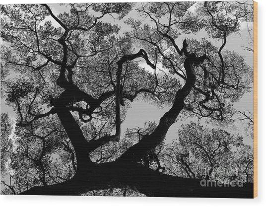 Old Koloa Wood Print