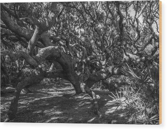 Old Oaks Wood Print