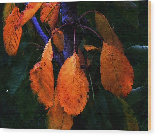 Old Orange Leaves Wood Print