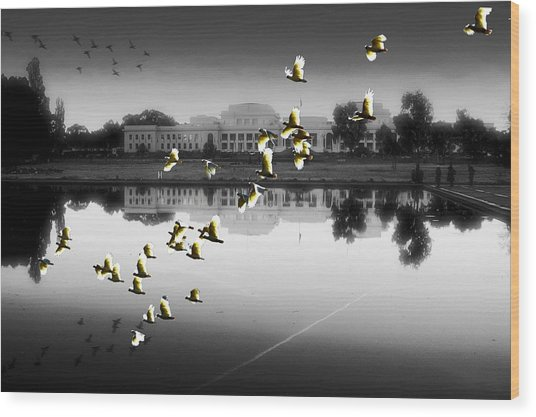 Old Parliament House Canberra Wood Print