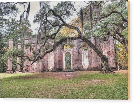 Old Sheldon Church - Bending Oak Wood Print