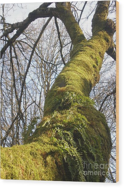 Old Tree Trunk Wood Print