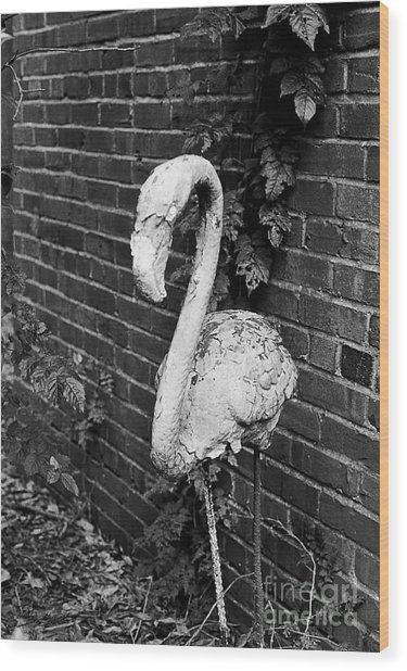 Old Yard Flamingo Wood Print