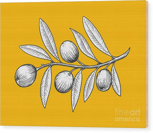 Olive Branch Engraving Style Vector Wood Print by Alexander p