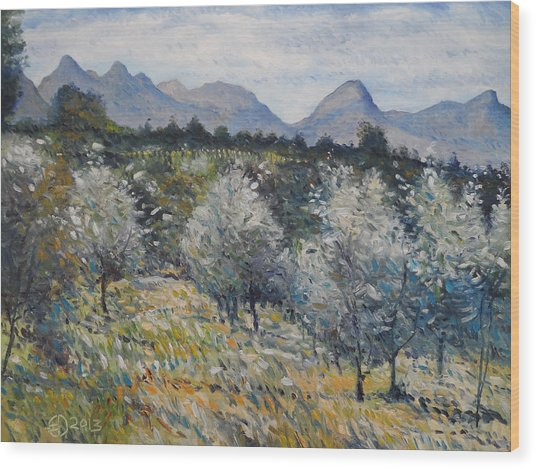 Olives At Diemersfontein Cape South Africa. Wood Print by Enver Larney