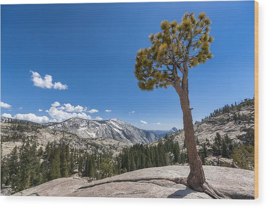Olmsted Point Yosemite Wood Print