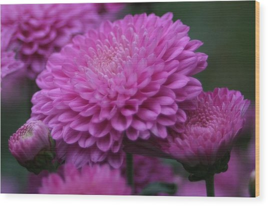 Omg Pink Wood Print