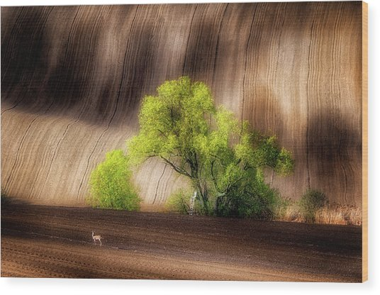 On The Fields Wood Print