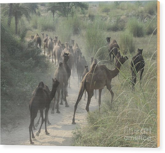 On The Road To Pushkar Wood Print
