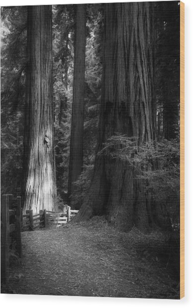 On The Trail At Sunrise Wood Print