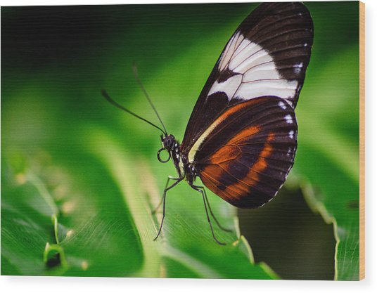 On The Wings Of Beauty Wood Print