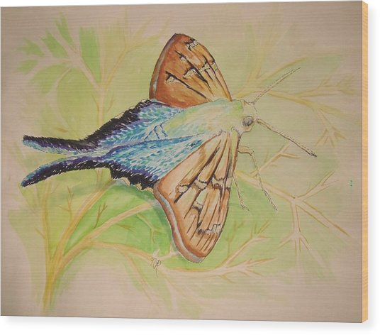 One Day In A Long-tailed Skipper Moth's Life Wood Print