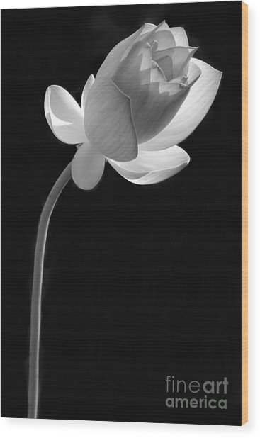 One Lotus Bud Wood Print