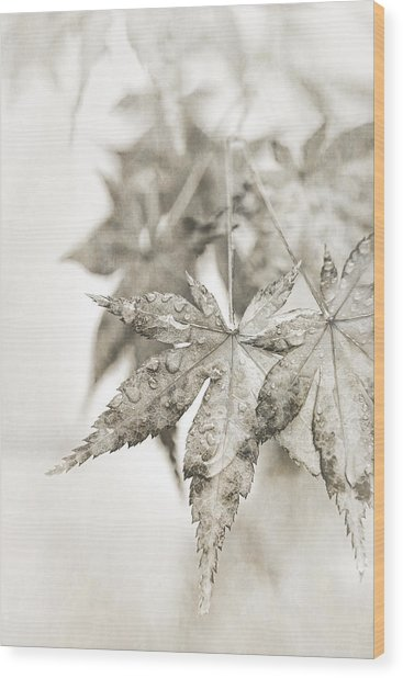 One Misty Moisty Morning Wood Print