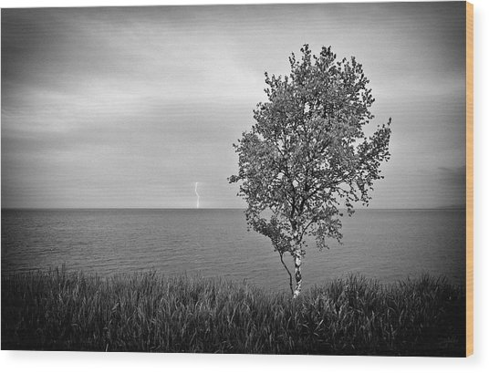 Wood Print featuring the photograph One On One  by Doug Gibbons