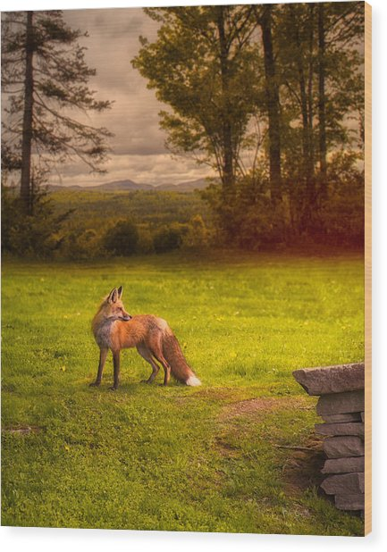 One Red Fox Wood Print